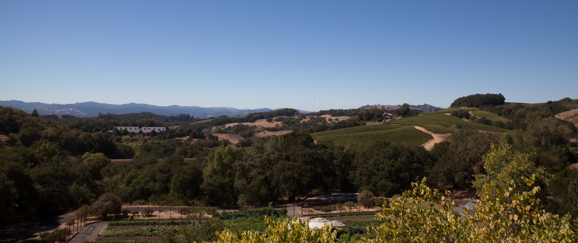 Chalk Hill Estate, Sonoma County