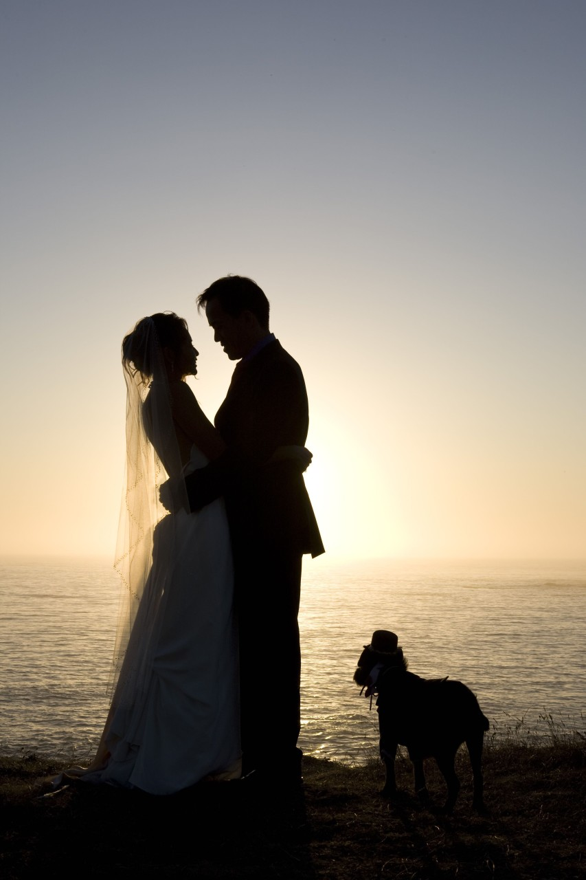 weddings with dogs - 3
