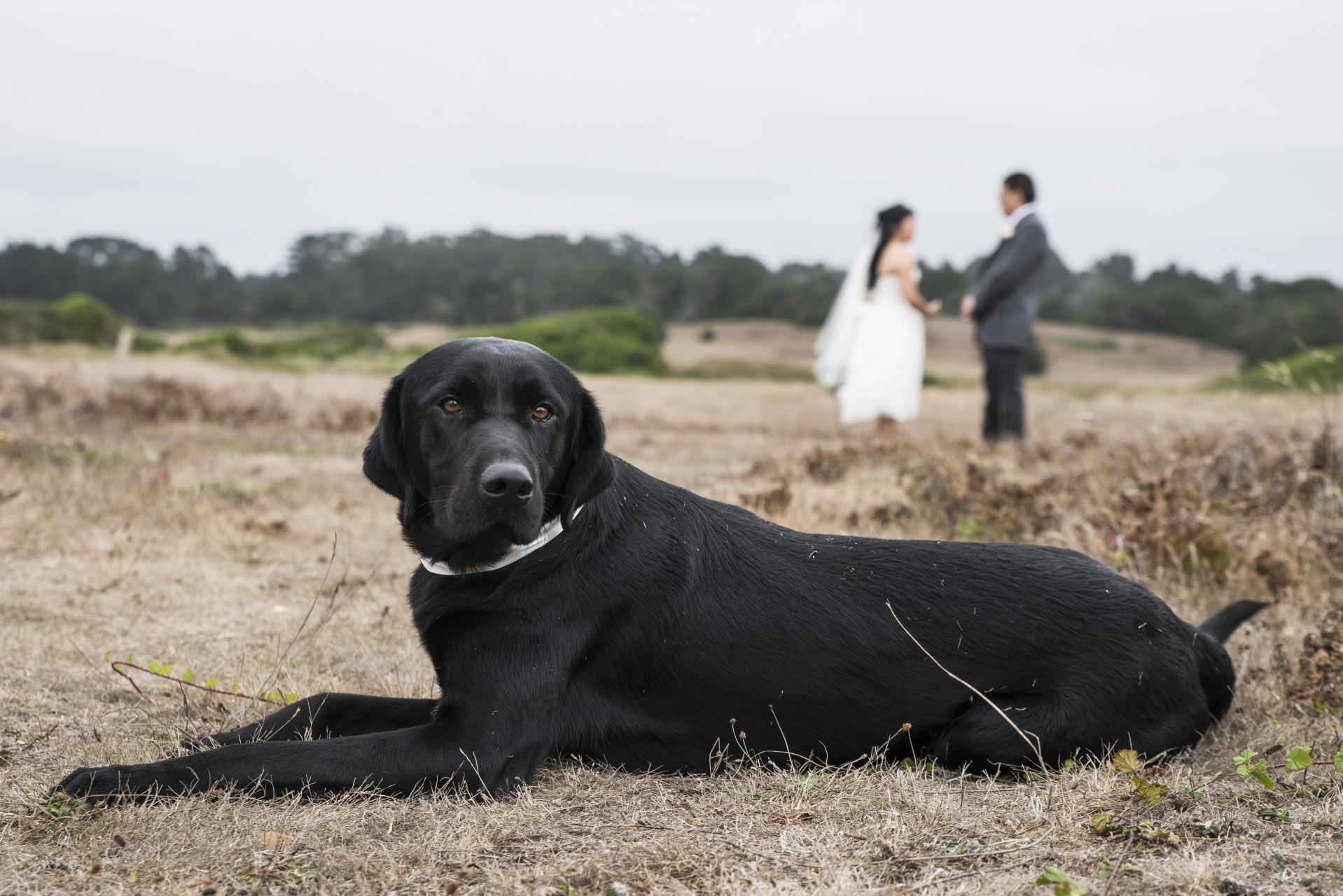 dogs weddings jperlman rlutge - 18