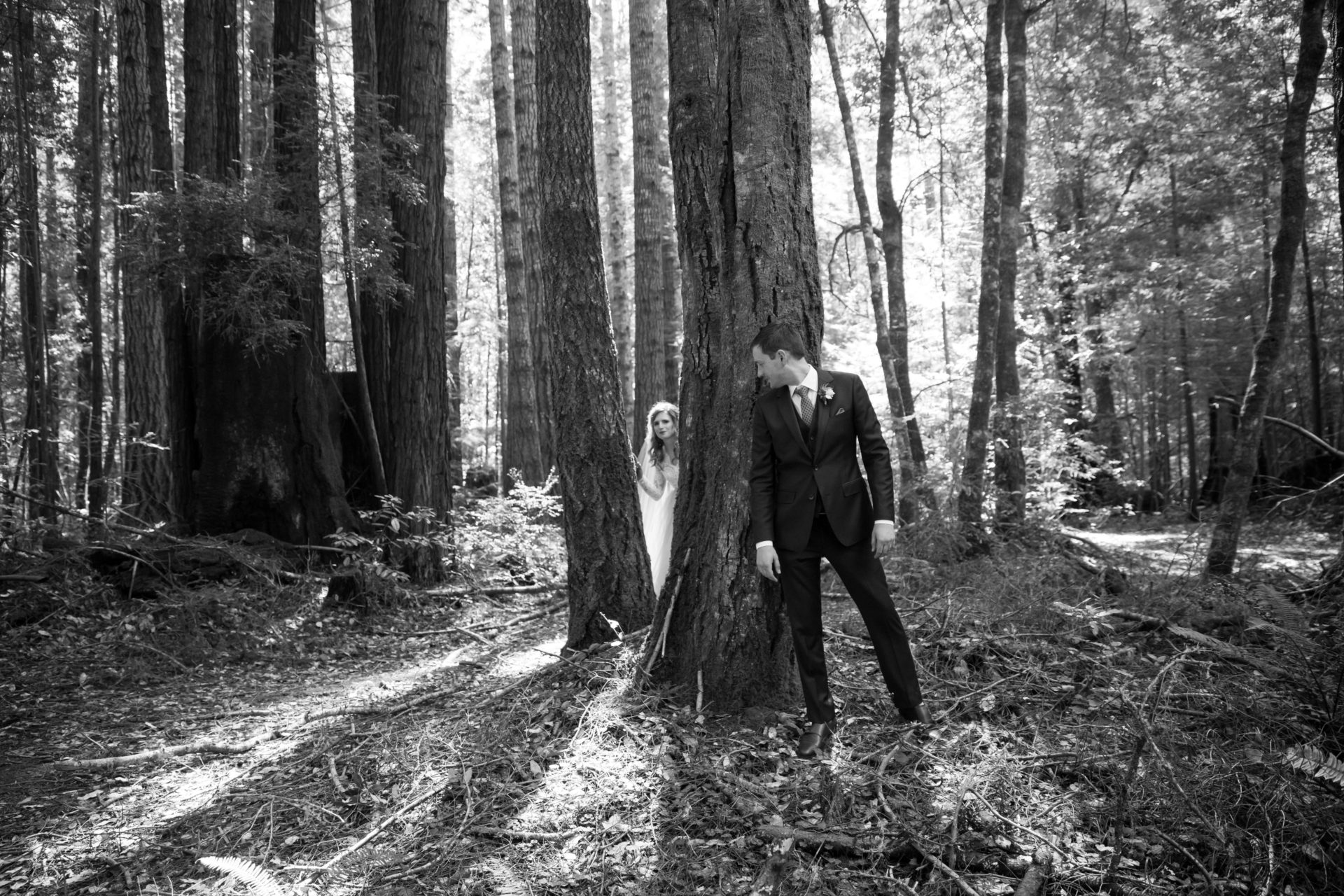Reveal, first look in the forest, near Mendocino Woodlands.